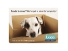 Dog in Box 07
